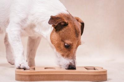 オモチャにマズルを入れる犬