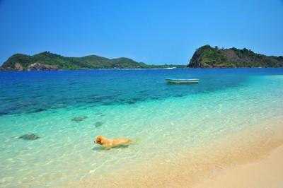 綺麗な海で泳ぐ犬