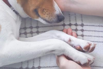 犬の手と顔に触れる女性の手