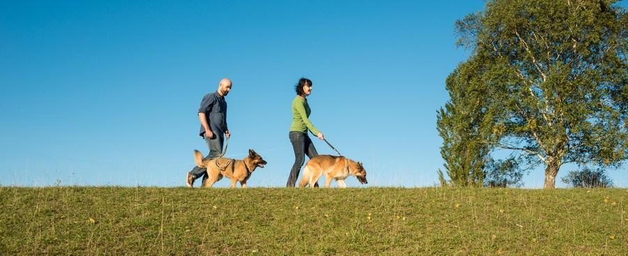 散歩する夫婦と犬