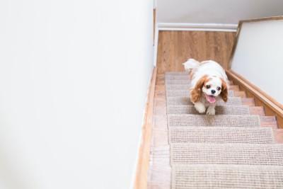 家の階段を駆け上る犬