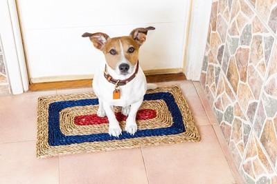 玄関でおとなしく待つ犬