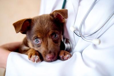 医師に抱えられた犬
