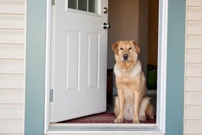 開いた玄関ドアの前に座る犬