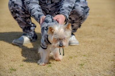 飼い主とペアルックの服をきた犬