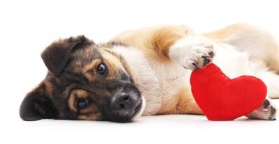 ハート型のおもちゃと子犬