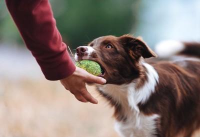 犬からボールを受け取ろうとする人