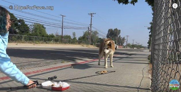 警戒して人を見つめる犬