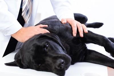 病院で診察を受ける犬