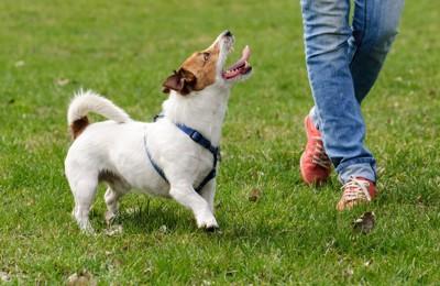 飼い主と歩く犬