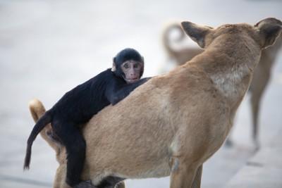 犬にしがみつく小さな猿