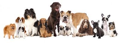 いろいろな品種の犬