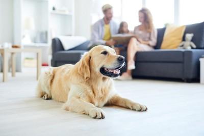 ソファーで本を読む家族と離れた場所に伏せる犬