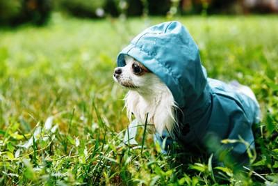 雨靴を履いている犬