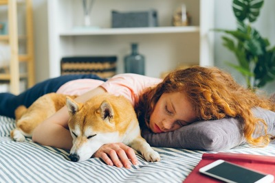 ベッドで一緒に昼寝をする少女と柴犬