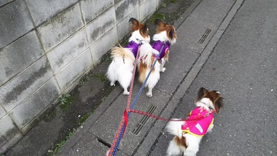 3匹で散歩