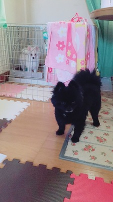 愛犬の投稿画像