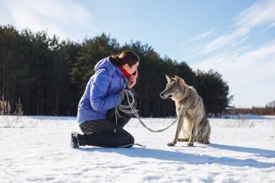 ハイイロオオカミを訓練する女性トレーナー