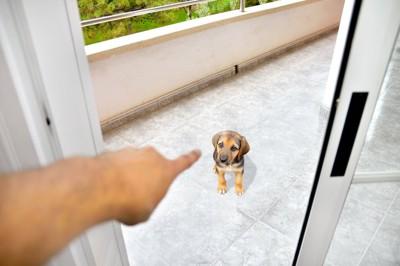 ベランダにいる犬を指さしている人