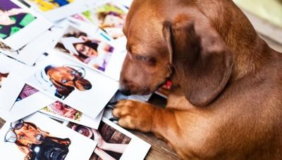 写真を吟味する犬
