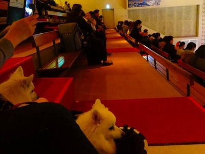 観客席の犬