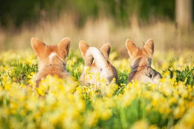 3頭の犬のおしり
