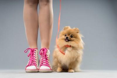 女性と小型犬
