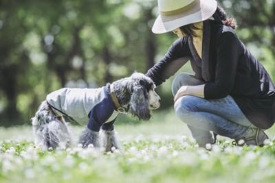 野原で散歩を楽しむ老犬