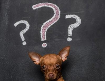 疑問を持つ犬