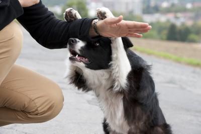 芸をする犬