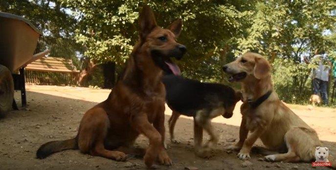 足をケガした犬と仲間たち
