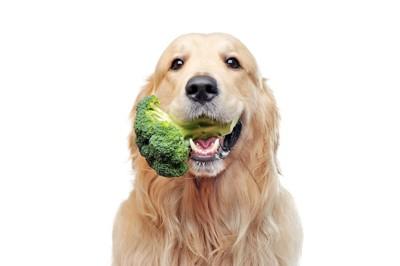 ブロッコリーを銜えた犬
