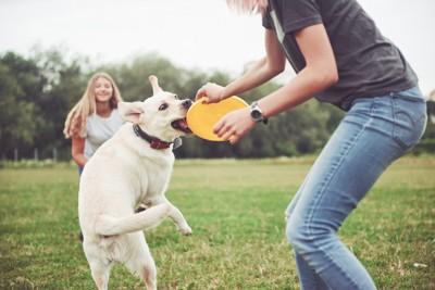飼い主と楽しそうに遊んでいる犬