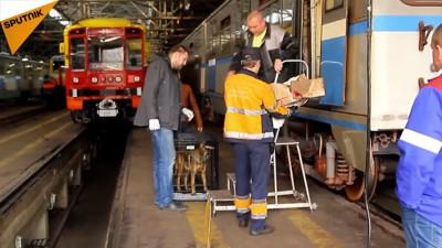 駅員さん達が段ボールに入った子犬を電車から降ろすところ