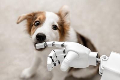子犬とロボットの手