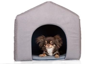 室内用の犬小屋の中の犬