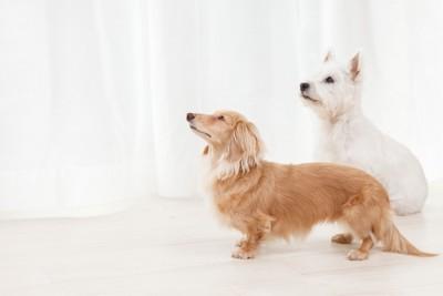 おすわりする2匹の犬