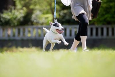 楽しそうに散歩をする犬