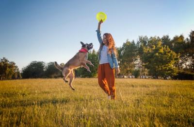ディスクを掲げる女の子ととろうとする犬