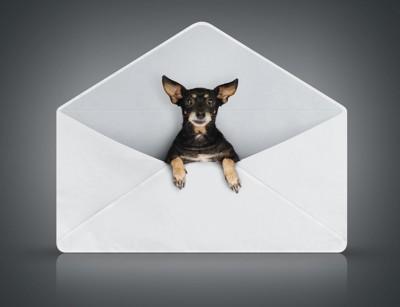 封筒のオブジェと犬