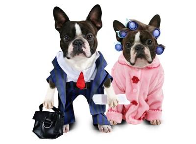 コスプレをする犬のカップル