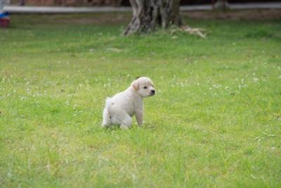 うんちポーズの子犬