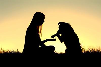 犬と人の影