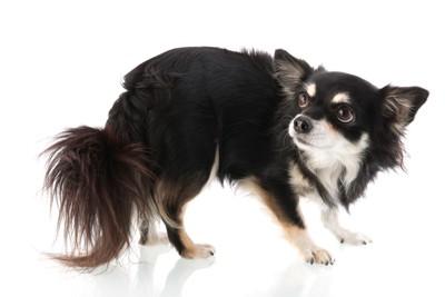 低い姿勢で怖がっている犬