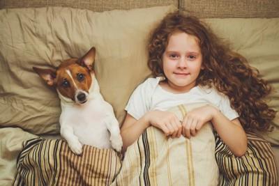 ベッドで仰向けになったジャックラッセルテリアと女の子