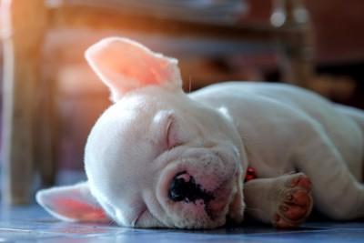 眠るフレンチブルドッグ