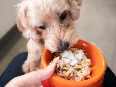 オレンジの食器、待ちきれない犬