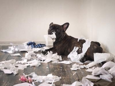ティッシュや紙を散乱させる犬