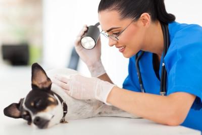 女性の獣医と皮膚の診察を受けている犬