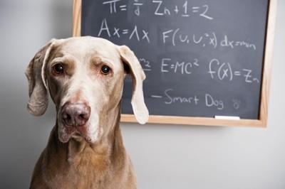 お勉強する犬